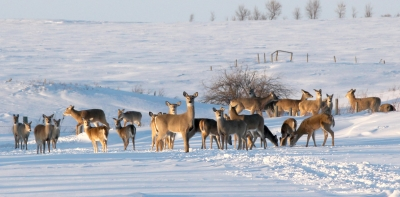 Harsh winter could affect deer population